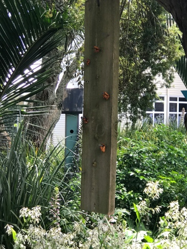 Feeding the birds with our food scraps